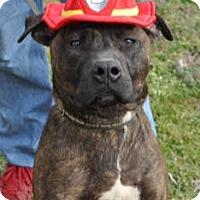 Adopt A Pet :: Trouble - Richmond, VA