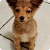 Adopt A Pet :: Luna-ADOPTION PENDING - Boulder, CO