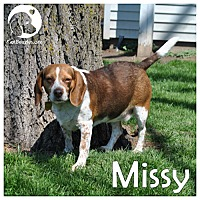 Adopt A Pet :: Missy - Pittsburgh, PA