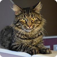 Adopt A Pet :: Majestic- Leg Rubber! - Arlington, VA