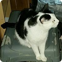 Adopt A Pet :: William - Kitchener, ON