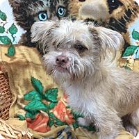 Adopt A Pet :: Scotty - Decatur, AL