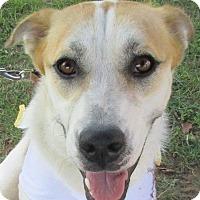 Adopt A Pet :: Bonnie Bell - Aurora, IL
