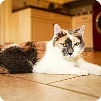 Adopt A Pet :: Lylah - Trevose, PA