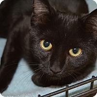Adopt A Pet :: Haunt - Ogden, UT