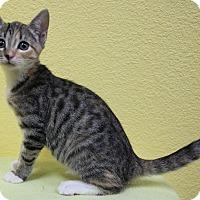 Adopt A Pet :: Ruth - Benbrook, TX