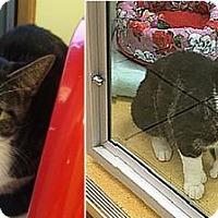 Adopt A Pet :: Kitty and Kat - Hudson, NY