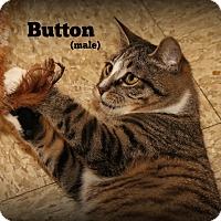 Adopt A Pet :: Button - Springfield, PA