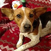 Adopt A Pet :: Maci - Homewood, AL