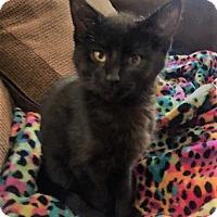 Adopt A Pet :: Batman - Aurora, IL