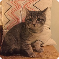 Adopt A Pet :: Willowby - Addison, IL