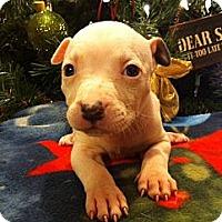 Adopt A Pet :: Brisbane - Roaring Spring, PA