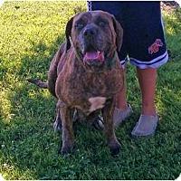 Adopt A Pet :: Zoy - Asheboro, NC