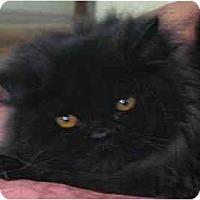 Adopt A Pet :: Nicolina - Davis, CA