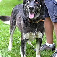 Adopt A Pet :: Sockett - Springfield, IL