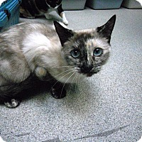 Adopt A Pet :: Mittens - Newport Beach, CA
