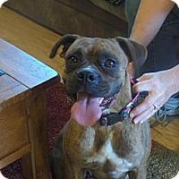Adopt A Pet :: Ella - Las Vegas, NV