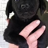 Adopt A Pet :: Arlene Fowler - Gainesville, FL