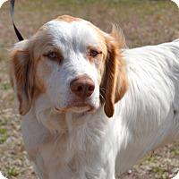 Adopt A Pet :: Max - Larned, KS