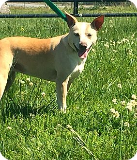Terrier (Unknown Type, Medium) Mix Dog for adoption in Gallatin, Tennessee - Honey