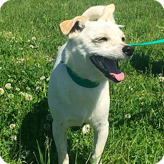 Terrier (Unknown Type, Medium) Mix Dog for adoption in Gallatin, Tennessee - Abi