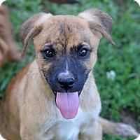 Adopt A Pet :: Houston~ meet me! - Glastonbury, CT
