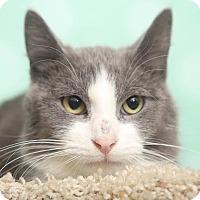 Adopt A Pet :: Kobe - Chippewa Falls, WI