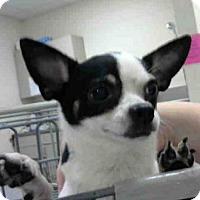Adopt A Pet :: NINA - Conroe, TX