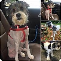 Adopt A Pet :: Winston - Lindale, TX