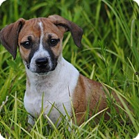 Adopt A Pet :: Freckles - Cedartown, GA