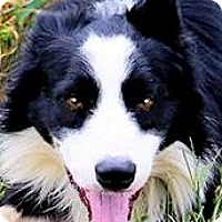 Adopt A Pet :: BUDDY(A TRUE COMPANION! - Wakefield, RI
