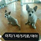 Adopt A Pet :: Aji