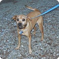 Adopt A Pet :: Missy - Burgaw, NC