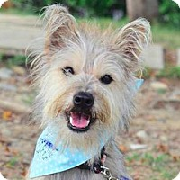 Adopt A Pet :: Woody - San Ramon, CA