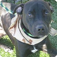 Adopt A Pet :: Andretti - Cumming, GA