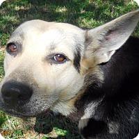 Adopt A Pet :: Stella - Dripping Springs, TX