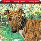 Adopt A Pet :: Bryson