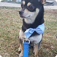 Adopt A Pet :: TAZ - Bridgewater, NJ