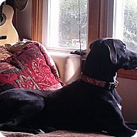 Adopt A Pet :: Rocky - Brattleboro, VT