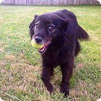 Adopt A Pet :: Cocoa aka Coke in Texarkana Texas - Texarkana, TX