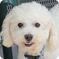 Adopt A Pet :: Gabriel - La Costa, CA