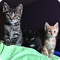 Adopt A Pet :: Rome - Byron Center, MI