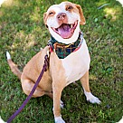 Adopt A Pet :: Adorable Ms. Peanut - VIDEOS