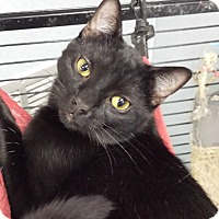 Adopt A Pet :: Bruce Willis - Richboro, PA