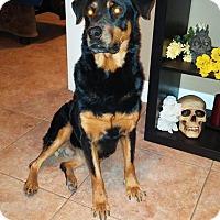 Adopt A Pet :: luci - Gilbert, AZ