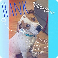 Adopt A Pet :: Hank - Knoxville, TN