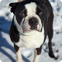 Adopt A Pet :: Kobe - Reisterstown, MD