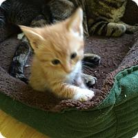 Adopt A Pet :: Whiskey - Monroe, GA