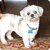 Adopt A Pet :: Keller - Houston, TX