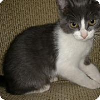 Adopt A Pet :: PIPPIN - Rancho Cucamonga, CA